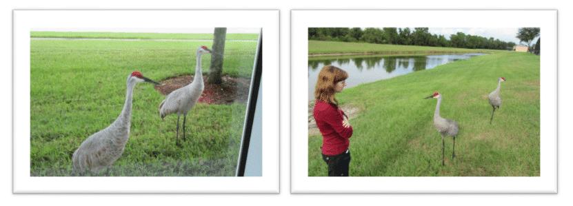 Birding in Orlando