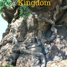 Animal Kingdom Tree of Life
