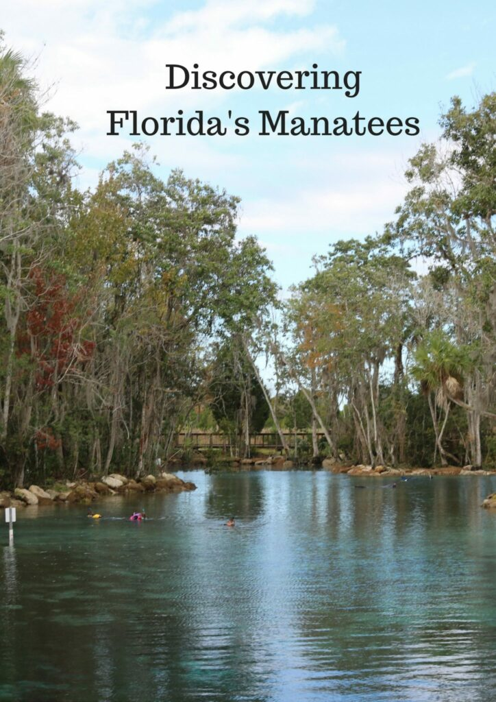 Discovering Florida's Manatees