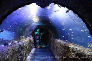 360 Tunnel at SEA LIFE